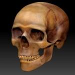 skull test.